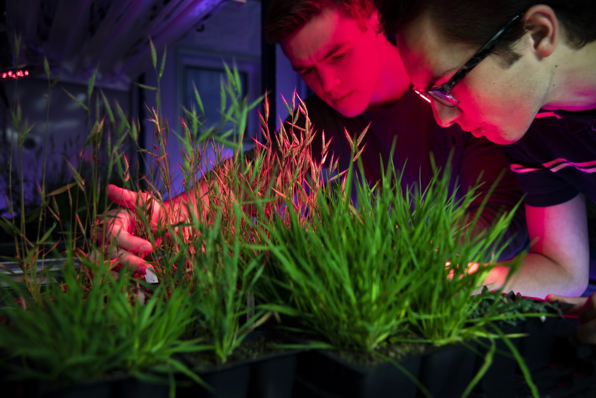 Biochemists in the Amasino Lab observe plants in a growth chamber