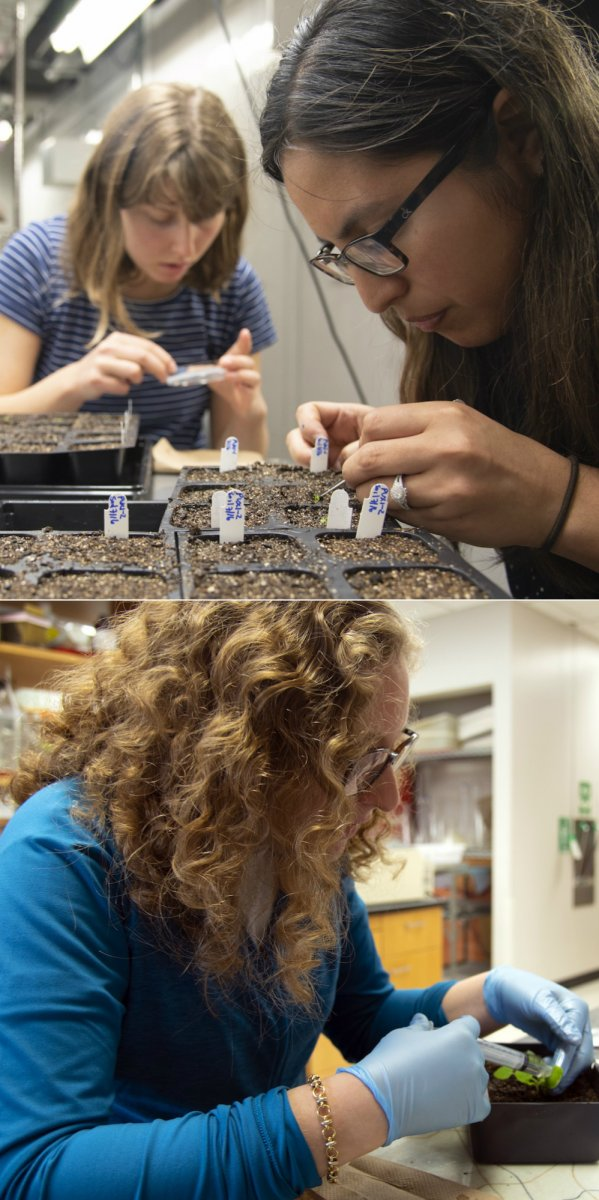 Students in the Bednarek Lab work with plants.