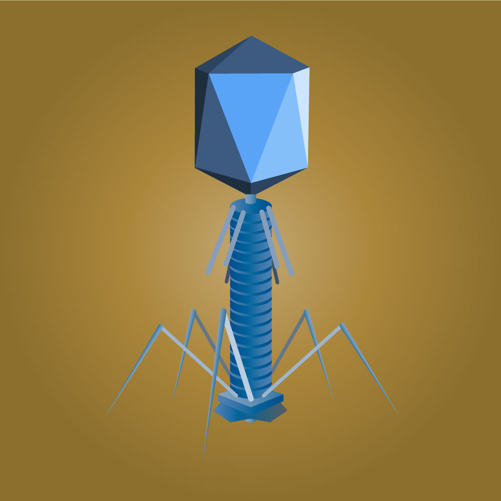 An image of a phage.