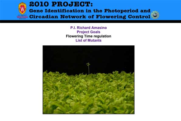 Photo of 2010 Project homepage