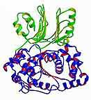 Asparagine Synthetase B
