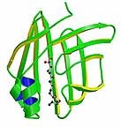 Fatty Acid Binding Protein