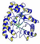 Phosphotriesterase