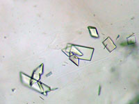 Crystals of myosin bound to ulapualide