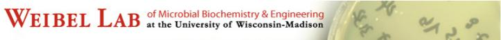 Weibel Lab Logo