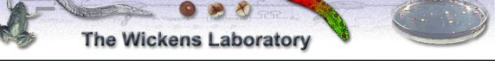 Wickens Lab Logo