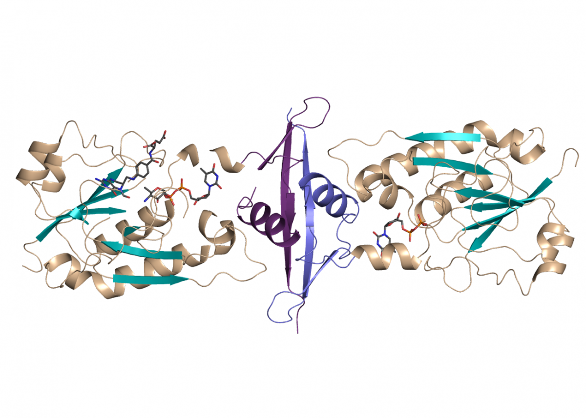 Image of protein structure from Myco- bacterium tuberculosis