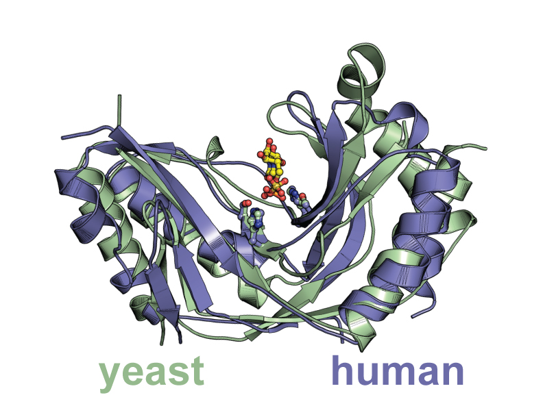 Structure present in the paper that is of a protein in a subunit of the spliceosome.