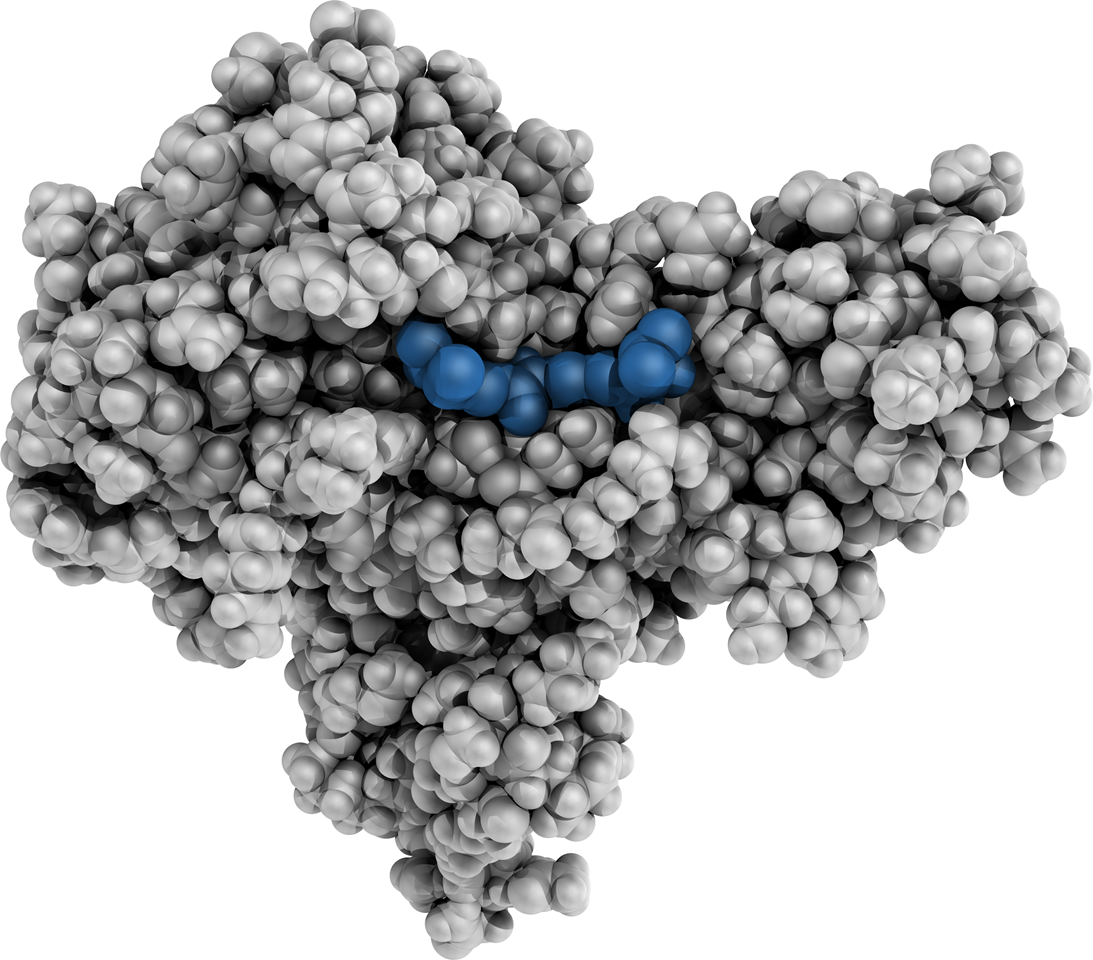 Photo of molecule with possible binding site