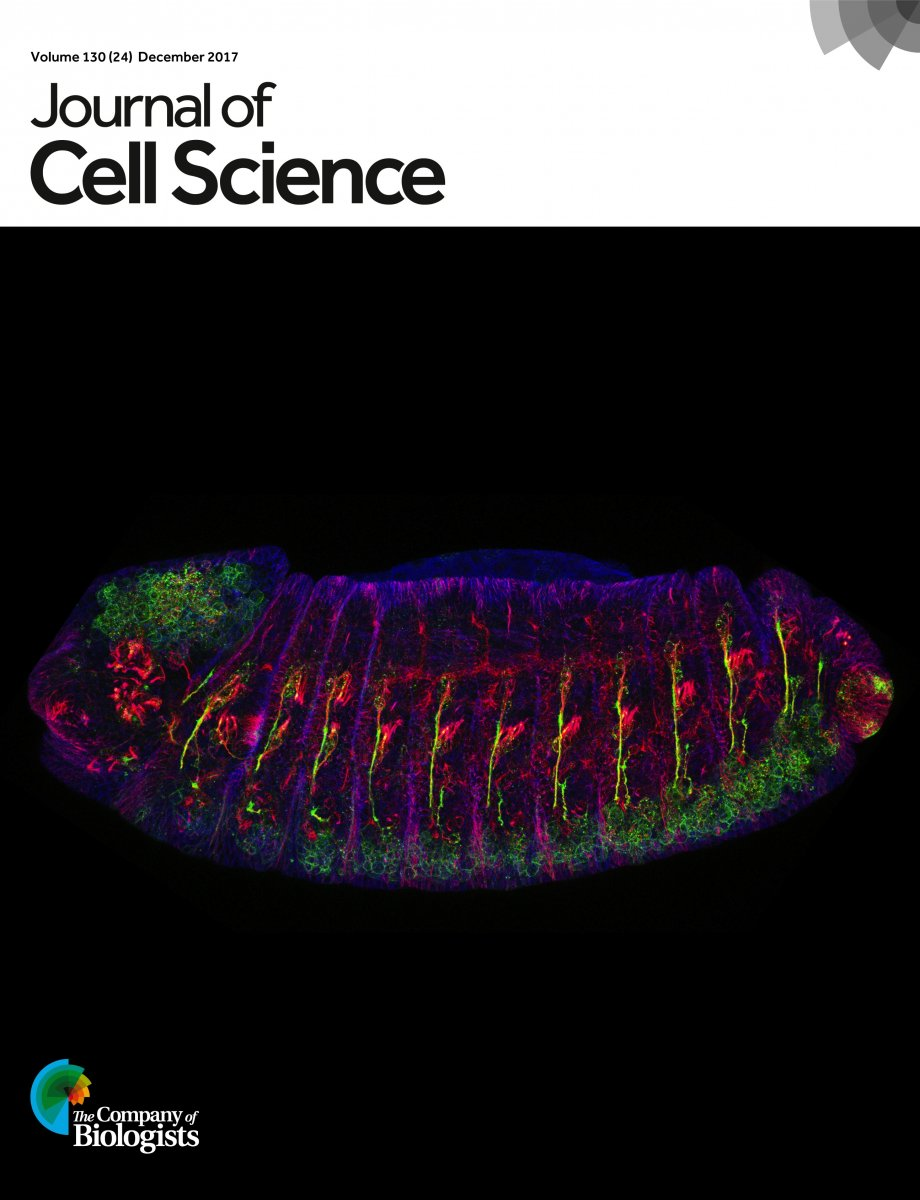 Image of journal cover by biochemists Jill Wildonger and Brian Jenkins