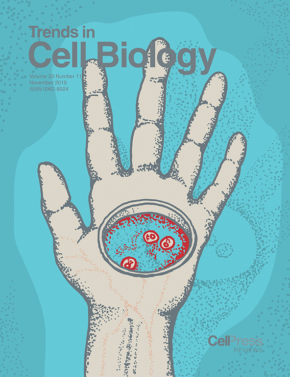 Journal cover by Jason Cantor for Trends in Cell Biology November 2019 issue