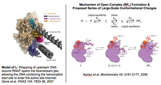 Graphic of Model of I2 and the open complex formation