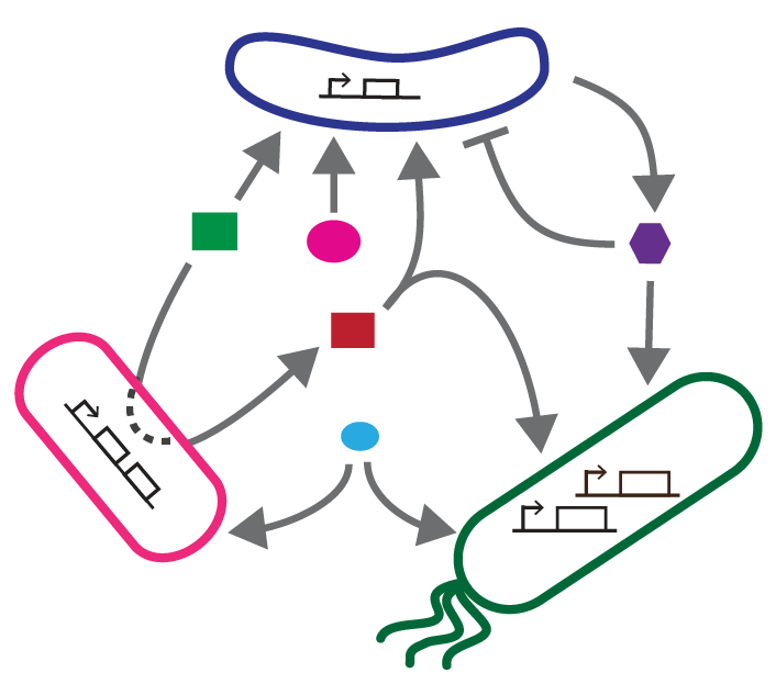 Schematic of a microbial interaction network