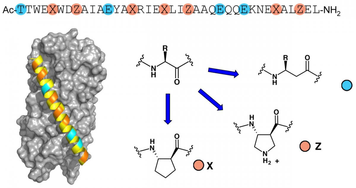 Figure 2. An α/β-peptide that inhibits HIV infection.