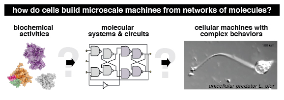 Research image of how cells build microscale machines