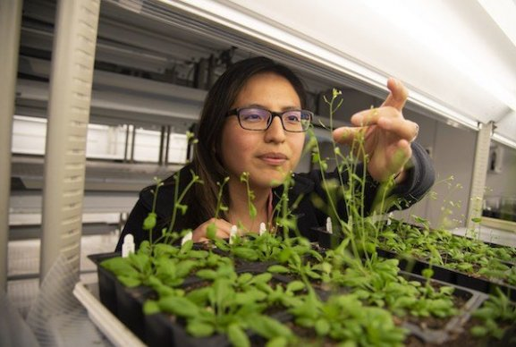 Jessica Cardenas, graduate student in the Bednarek Lab, working with plants