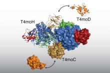 Image of T4MO complex